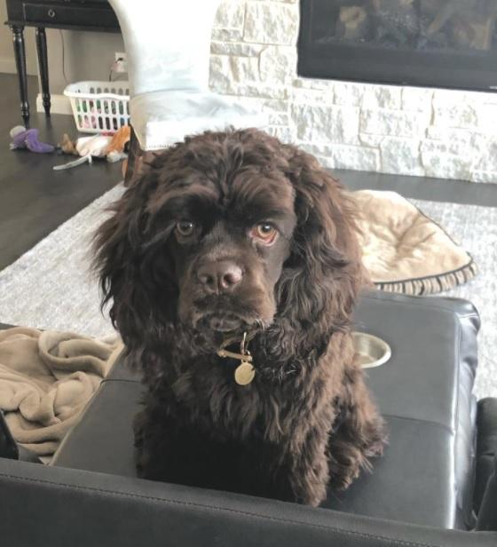 References for Mary's Cocker Haven from Previous Cocker Spaniel Litters