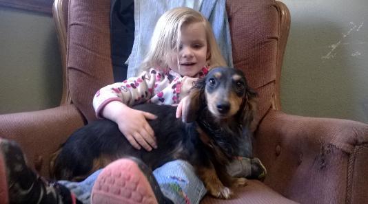 Family Raised AKC Miniature Dachshund Puppies near me