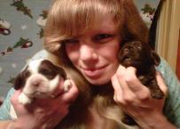 Baby Cocker Spaniel Puppies